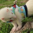 Accesorios para roedores
