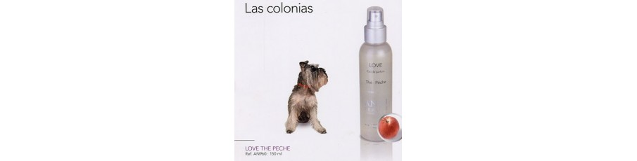 Colonias ANJU BEAUTE